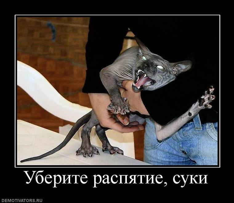 Боишься спать один заведи котенка демотиватор