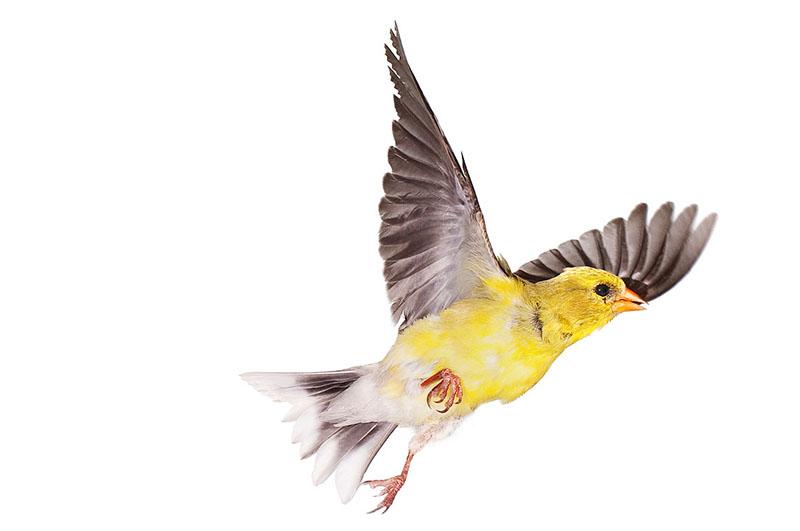 Картинки птица в полете для детей, фотографий программа