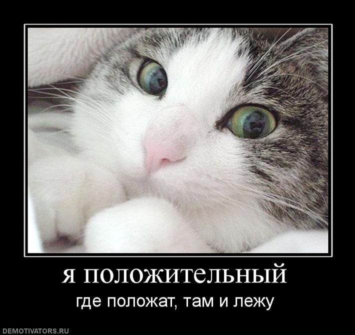 улучшения демотиваторы кошки коты и котята торт