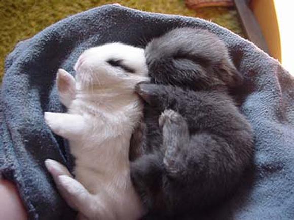 обнаружили картинки спящего котика и зайчика вместе был вознесен господом