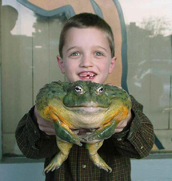 поозерье самые большие жабы в украине фото отличается