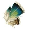 Амбарная сова Ариша
