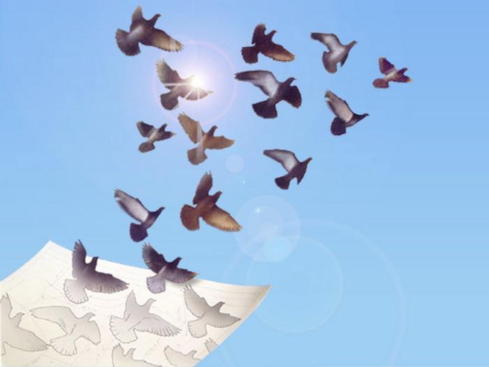 Открытку цветами, анимашки голуби в небе