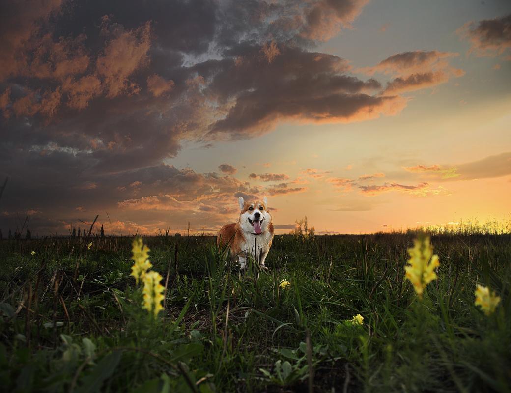 Картинки собачки на закат