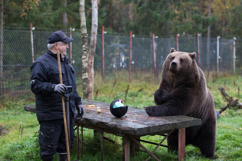 Бабушкино день, прикол с медведем картинка