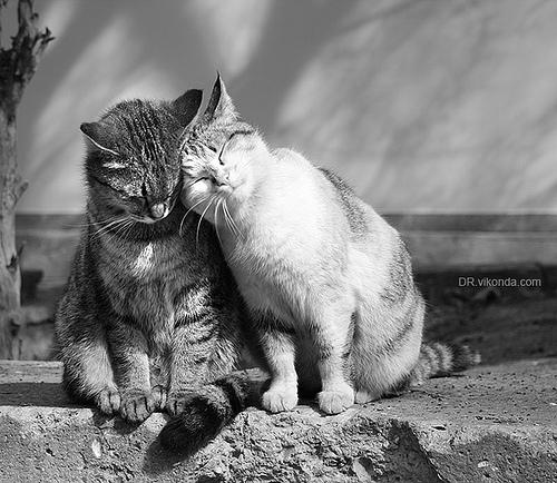 Прикольные открытки с кошкой о любви, для анимации