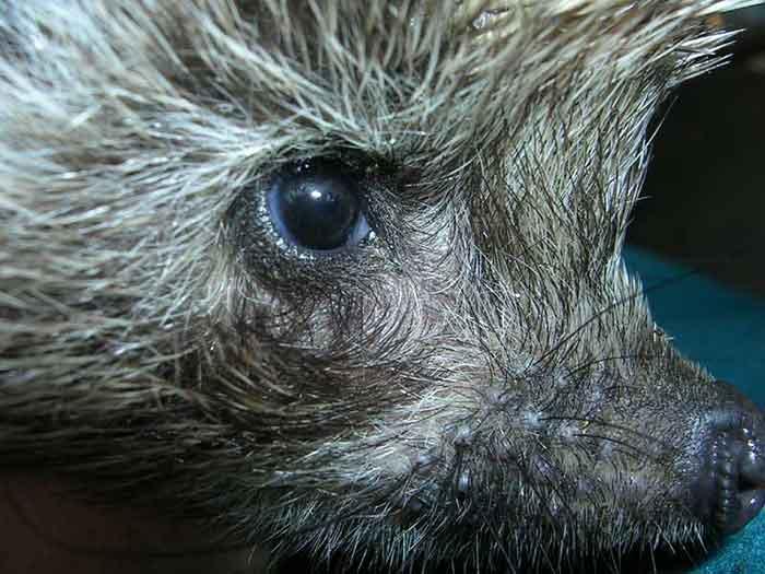 Коты турецкая ангора фото с голубыми глазами последнее
