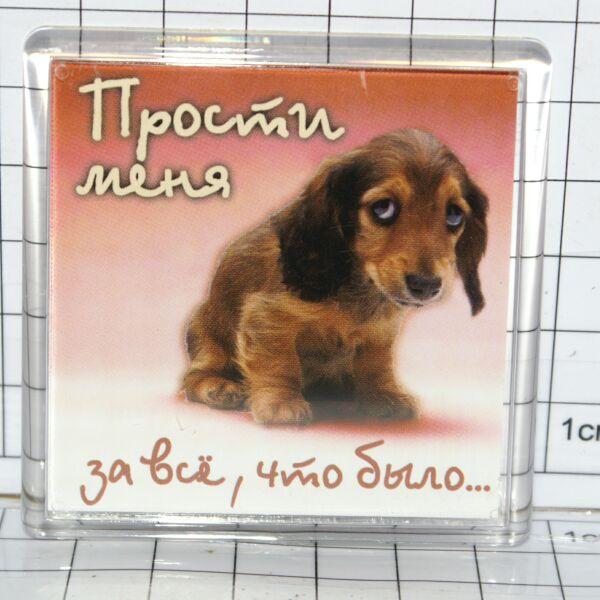 котята открытки прости за все и спасибо типажа могут быть