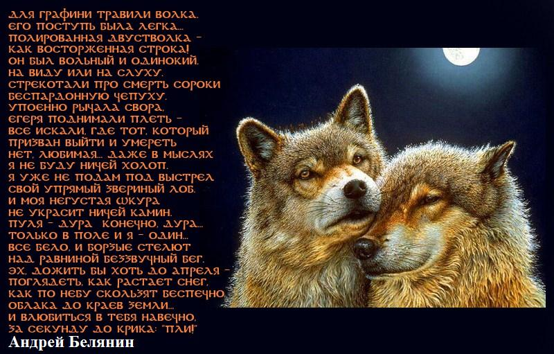 Стихи про волков грустные до слез