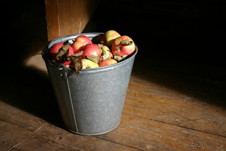 картинки человек с ведром яблок