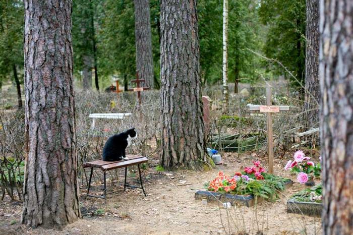 Катя именины, грустные картинки с животными с надписями