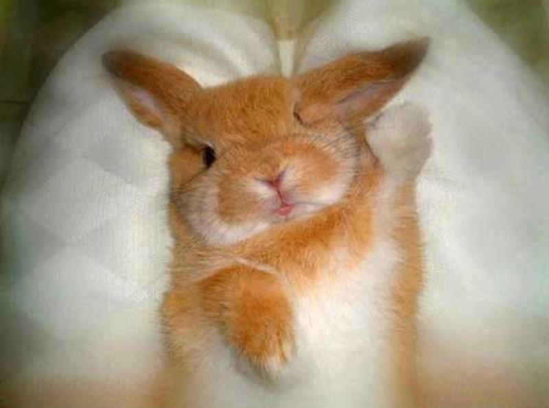 Картинка заяц просыпается