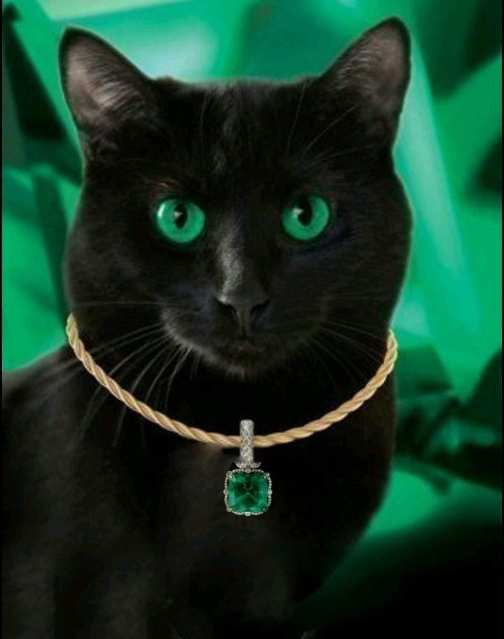 картинки котики с украшениями наиболее