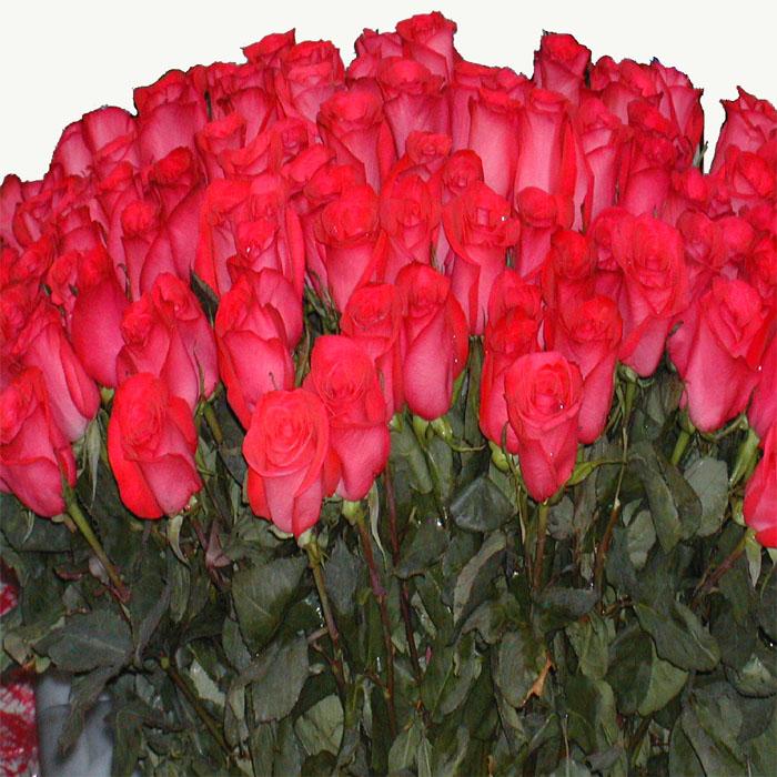 открытка с миллионами роз