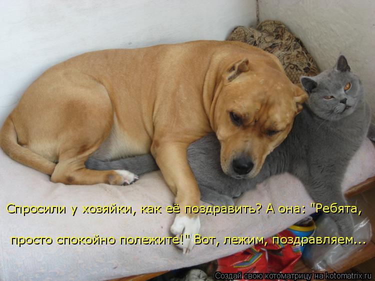 Прикольные картинки собак и котов с надписями, выздоровлением