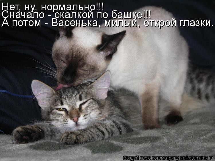 Картинки я хочу тебя котик