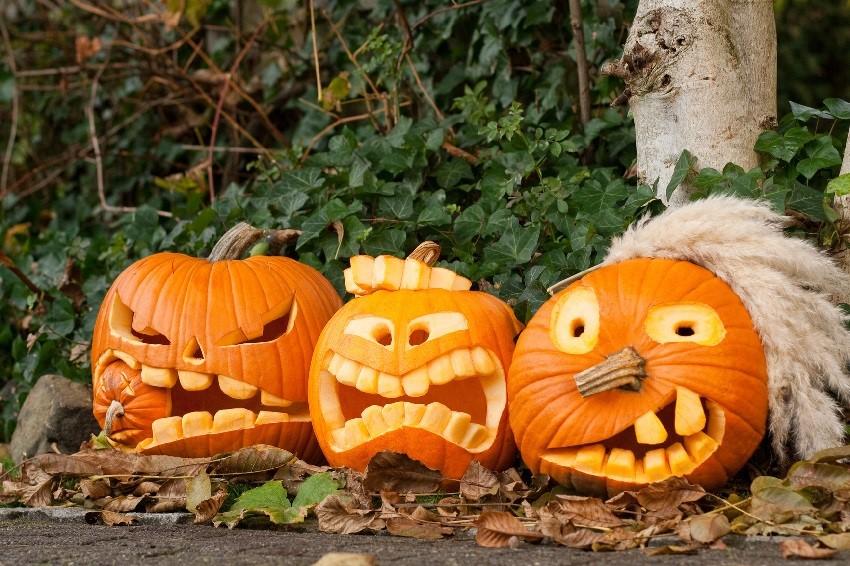 Картинки на хэллоуин из тыквы