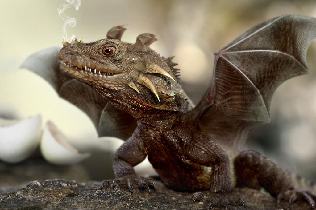 дракон реальный фото магическая присушка навсегда