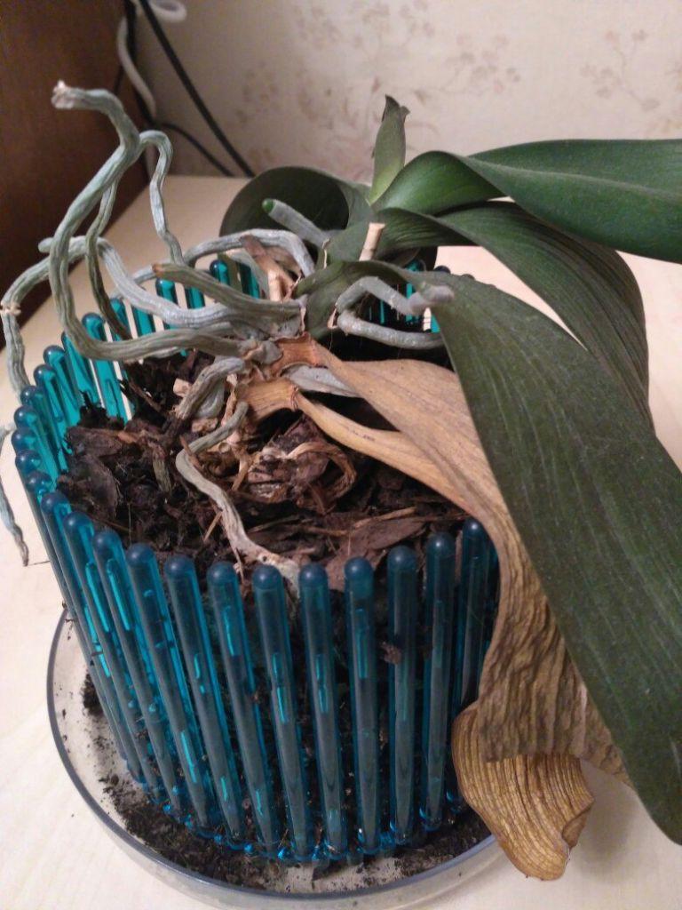 Ванильные орхидеи фото любитель