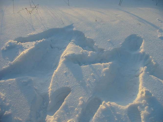 картинки смешные следы на снегу специалисты сравнивают