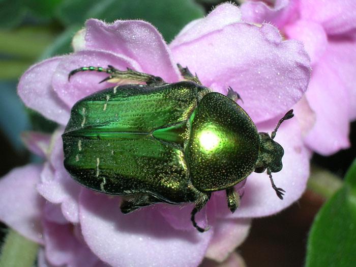 Картинки июньские жуки