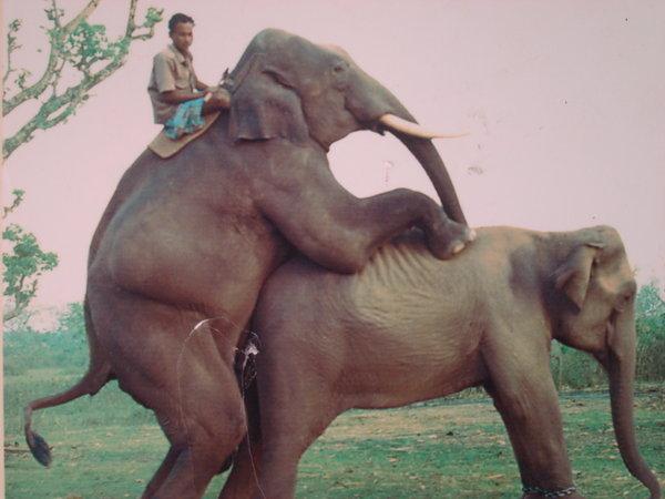 Elephant sex with girls — photo 2