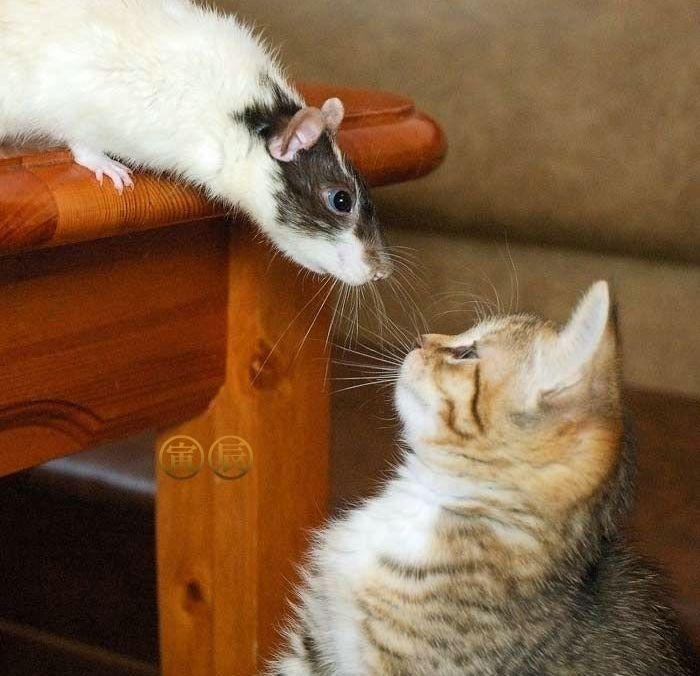 фейсбуке можете я сказал картинки котиков прекрасных