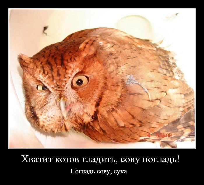 Смешные картинки с надписью про сову, картинки бизнесменов веселые