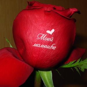 Поздравление, картинки розы с надписью люблю